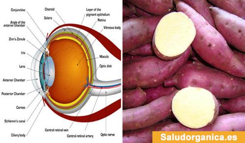 Las-batatas-pueden-ayudar-prevenir-ceguera-yudar-perder-peso
