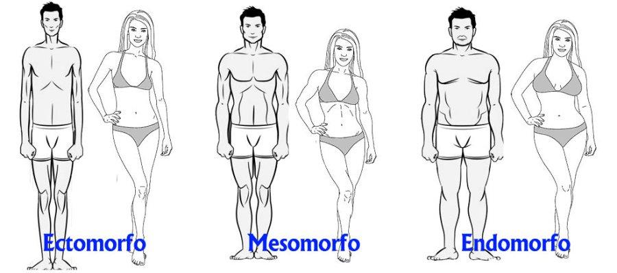 somatotipos-varios