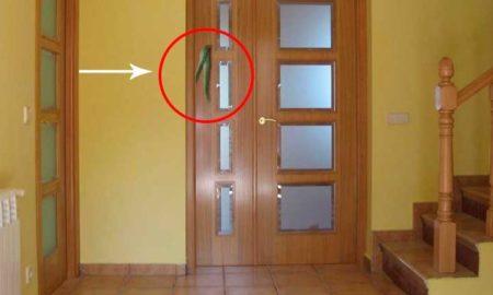 aloe-vera-en-la-puerta