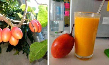 bebida-del-tomate-de-arbol-700x400