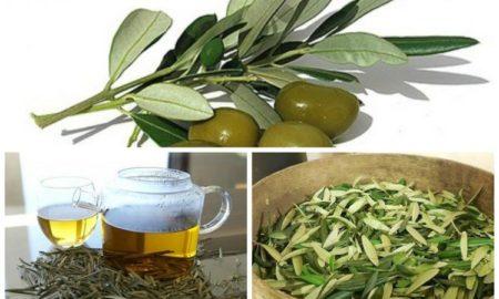 hoja-de-olivo