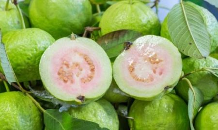 use-guava-leaves-to-beat-wrinkles-acne-dark-spots-and-skin-allergies-how-to-use