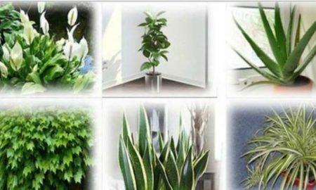 plantas-oxigeno-limpiar-aire