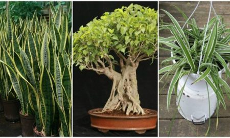 3plants-1024x495